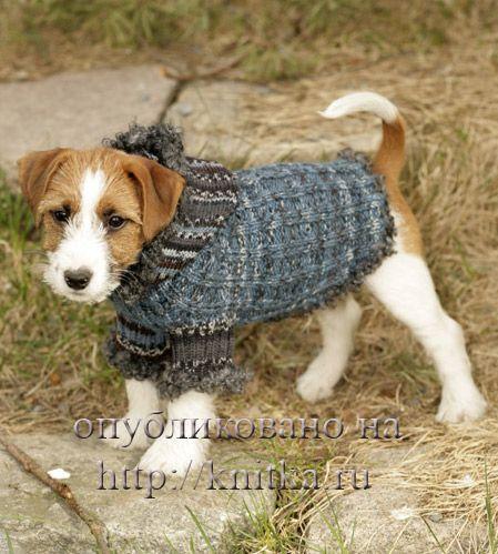 вязаная одежда для собак схемы. какие теплые кофты в моде зима.