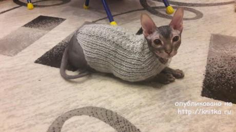 Свитер для кота спицами. Работа Ивановой Светланы вязание и схемы вязания