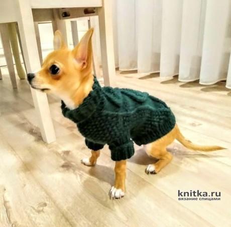 Как измерить собачку для вязания свитера вязание и схемы вязания