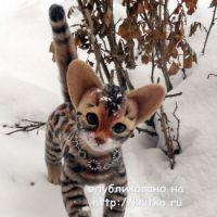 Вязаная игрушка – котенок. Работа Ирины