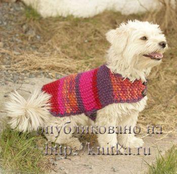 Накидка для собак. Вязание спицами.