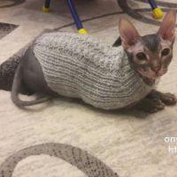 Свитер для кота спицами. Работа Ивановой Светланы